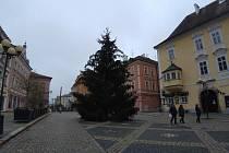Vánoční strom věnovala Chebu Jaroslava Hesová.