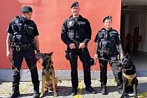 Psi městské policie v Chebu jsou vycvičení také k vyhledávání osob. Foto: Město Cheb