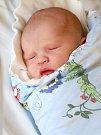 VÍTEK ŠPERL se poprvé rozkřičel ve středu 10. dubna v 1.47 hodin. Při narození vážil 3 710 gramů. Doma v Chebu se z malého Vítka těší sourozenci Adam s Markétou, maminka Štěpánka a tatínek Pavel.