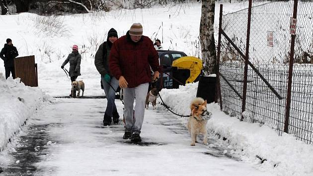 Společné venčení psů z chebského útulku završili účastníci opékáním párků