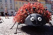 BERUŠKY! Květinová výzdoba Chebu je opravdu originální. Nově zdobí náměstí Krále Jiřího z Poděbrad i tři velké květinové berušky. Úspěch sklízí hlavně u těch nejmenších.