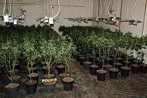 Pěstírna marihuany v Plesné na Chebsku, kde policisté objevili 500 kusů rostlin