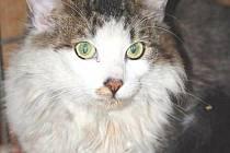 Mezi psy se ale vyskytuje i zástupce kočkovitých šelem, ačkoliv tomu není útulek uzpůsoben.