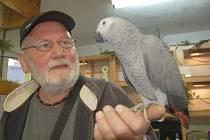 Desítky ptáků, králíků, morčat a kachen byly k vidění o víkendu v domě chovatelů v Aši. Konala se zde další výstava zvířat. Celý program se připravuje několik týdnů dopředu. Na výstavě si mohli návštěvníci vybrané papoušky i zakoupit.