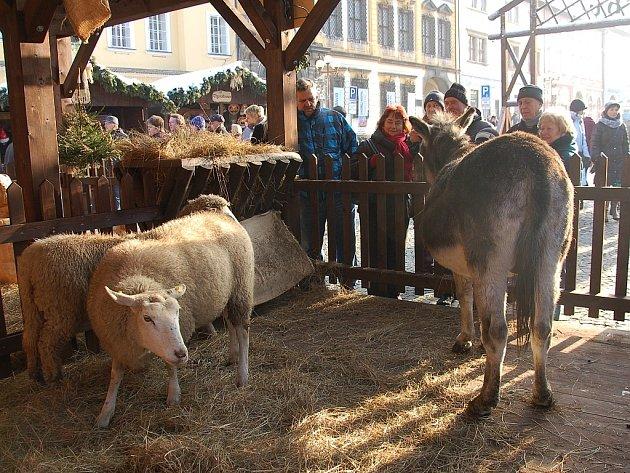 V obležení byly v ranních hodinách i nově vybudované vánoční trhy v Chebu. Na náměstí si desítky lidí mohly prohlédnout i betlém s živými ovečkami a oslem.
