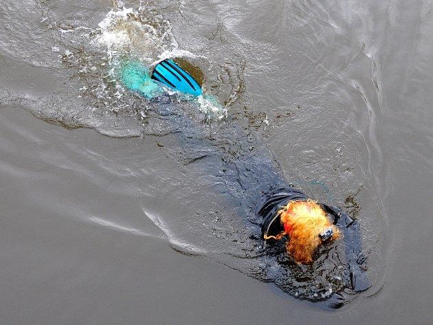 Voda osm stupňů Celsia a vzduch tři stupně Celsia – při takových nízkých teplotách se vydali do řeky Ohře pod chebský hrad potápět nadšenci z Klubu sportovního potápění Kajman Cheb.