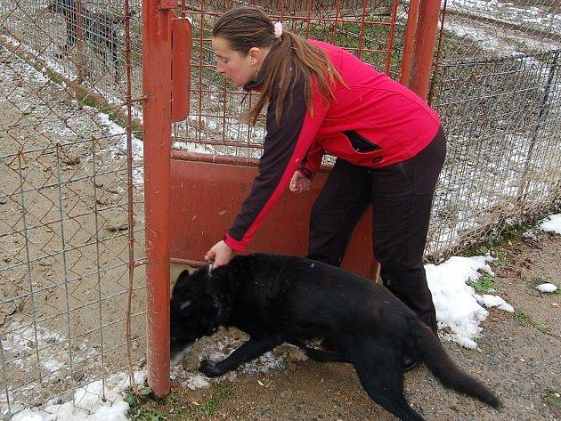 MARIE LOKINGOVÁ vede do kotce notorického útěkáře Cézara. Ten je naštěstí jedním z těch 'lepších'. Najdou se i psi, kteří během noci zdevastují svůj kotec.