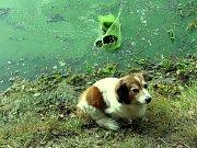 Na Jesenické přehradě na Chebsku jsou naštěstí podmínky ke koupání dobré