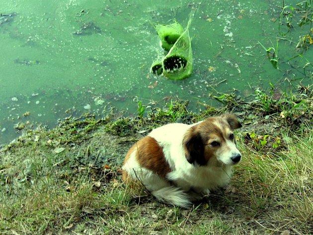 Voda v přehradní nádrži Skalka je opět zelená