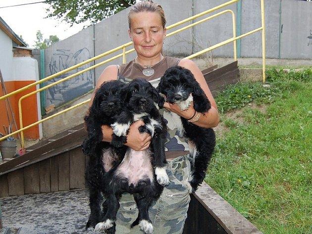 Do útulku v Horní Hraničné putují toulaví psi z Chebska. Někdy zde začínají svou cestu životem i nově narozená štěňata.