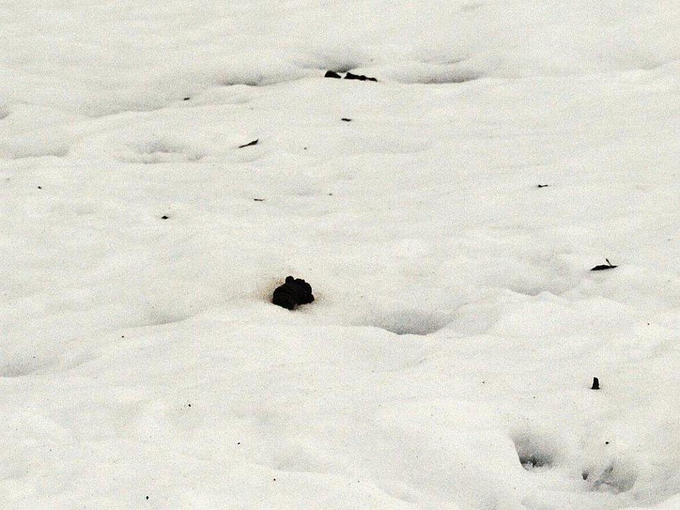 Tající sníh ukázal, co po dlouhé týdny ukrýval. Mnozí obyvatelé města si sníh pletli s odpadkovými koši. Na mnoha místech se válí i neuklizené psí exkrementy.