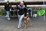 Krajská výstava psů v Karlových Varech.