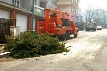 Kácení stromů ve Škroupově ulici