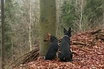 Chtěli se zbavit psů, tak je uvázali ke stromu a odešli