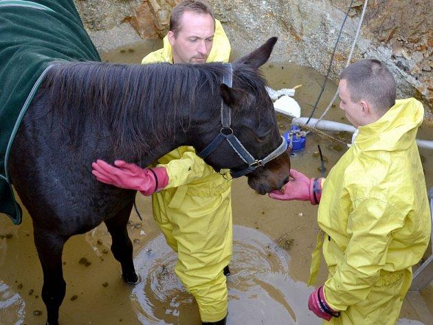 Záchrana koně ze septiku.