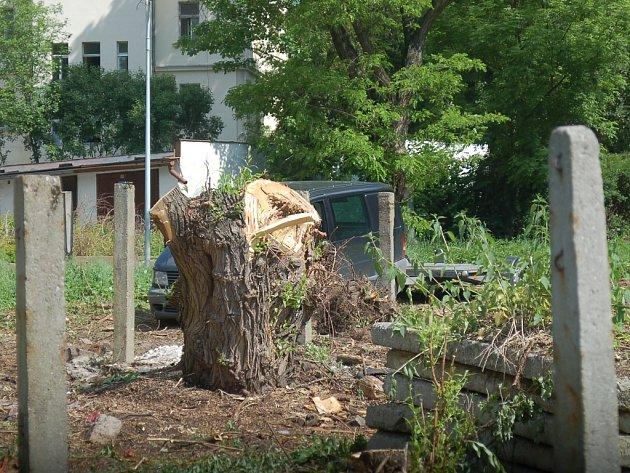 Na takovýchto vzrostlých stromech běžně hnízdí nejrůznější druhy zpěvného ptactva. Kácení stromů však patří k jednomu z kroků k potřebné rekonstrukci budovy.