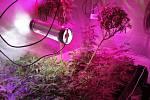 Kriminalisté odhalili další pěstírnu konopí.