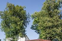 Andělské lípyje 6památných stromů–lip malolistých, která rostou v nadmořské výšce 614m.