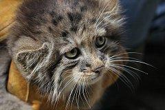 Výtěžek z benefiční akce půjde na kočky.