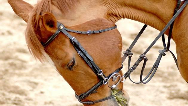 O koně na farmě Hory má být dokonale postaráno.