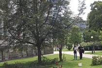 V úterý prořezávali zaměstnanci specializované firmy stromy v Alžbětiných sadech.