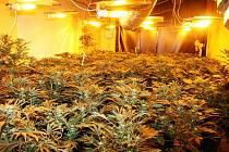 Pěstírna marihuany. Ilustrační foto.