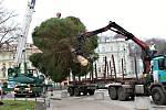 Kácení a usazení vánočního stromu v Karlových Varech.