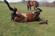 Koně jsem chtěla už od malička. Občas mě rodiče vzali se povozit na farmu. Všechno, co mělo čtyři nohy, mě od malička přitahovalo a chtěla jsem si na to pokusit sednout a jezdit.