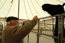 KAREL BEROUSEK při krmení mluvícího koně, kterýho má cirkus Soltán jediný na světě