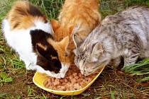 Tisíce divokých koček dostanou kvalitní krmení
