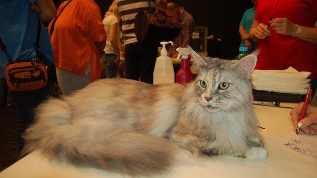 Mezinárodní výstava koček