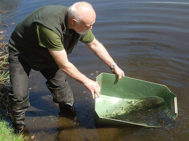 I DÍKY podpoře Karlovarského kraje rybáři mohou i letos vysazovat do toků v regionu ryby, které tady byly doma.