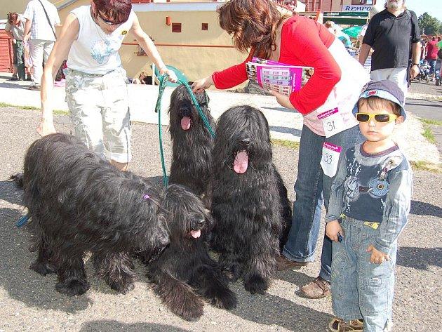 Na karlovarském výstavišti se konala výstava psů. Nechyběly soutěže a pestrý doprovodný program.