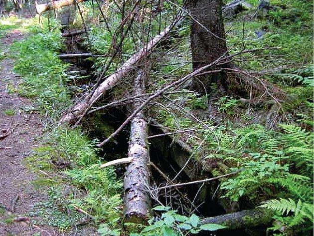 Popadané dřevo, zloději fošen.