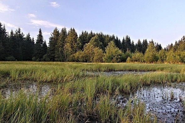 Rezervace Velikonoční rybník na Bečovsku