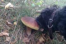 Náš pes Muf konečně našel houbu.