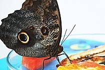 Motýlí dům se stal jednou z turistických atrakcí lázeňského města.