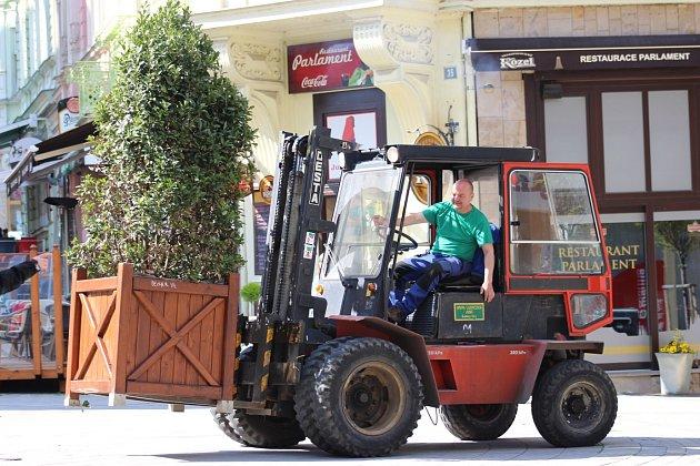 ZELEŇ DO ULIC. Karlovy Vary ještě před zahájením lázeňské sezony zkrášlily desítky keřů, stromů a další zeleně.