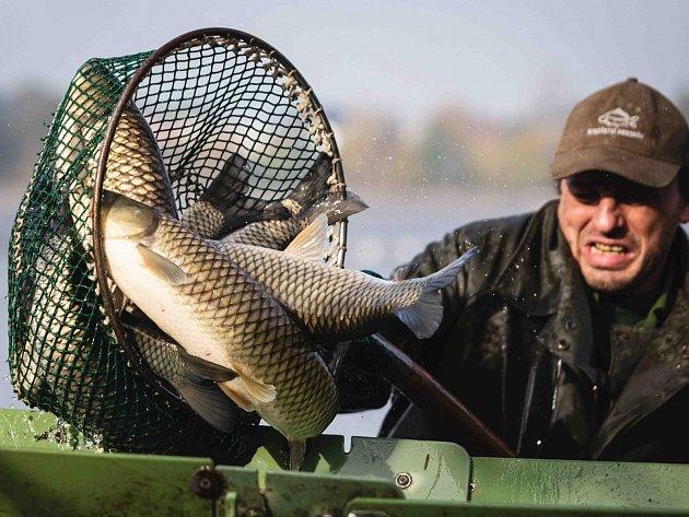 V LETOŠNÍM ROCE chtějí rybáři poskytnout zákazníkům větší výběr druhů ryb.