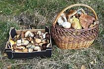 Při výpravách za houbami musí být člověk opatrný nejen na to, co v lese sebere.