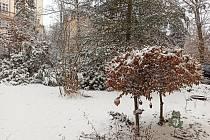 Sníh má žlutý nádech díky prachovým součástkám.