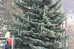 Karlovarský vánoční strom, i když nebudou žádné velkolepé oslavy, bude stát opět před Thermalem.