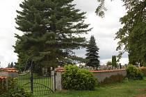 HŘBITOVNÍ ZÍDKA je nyní bez stromů. Po lípách zbyly pouze listnaté pařezy. Stanovice chtějí zídku opravit a pak podél ní nově vysázet kaštany.