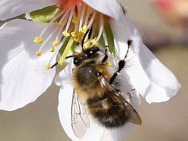 Bodavý hmyz může způsobit alergickou reakci.