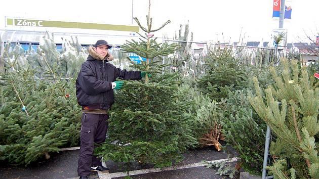LESNÍ KRASAVEC. Tímto vánočním stromkem by pohrdl málokdo. Jenomže je třeba za něj patřičně zaplatit.
