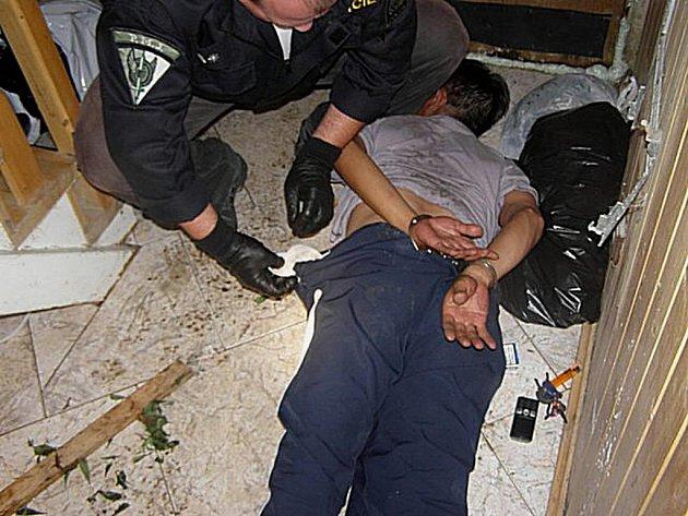 Ve večerních a nočních hodinách proběhla v obci Dlouhá Lomnice policejní akce zaměřena na zadržení pěstitelů marihuany.