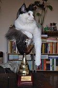 Kočičí vítěz