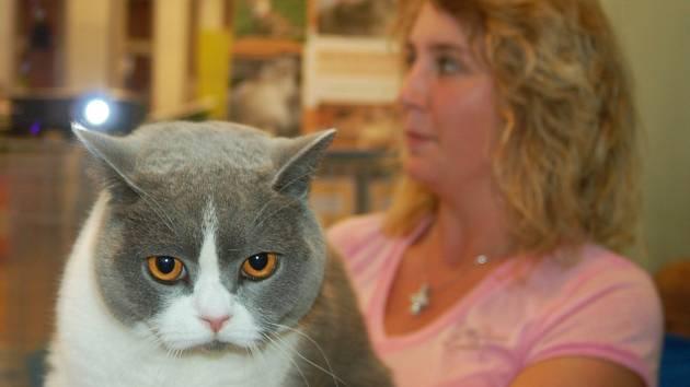 Mezinárodní výstava koček se uskuteční v Karlových Varech.