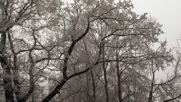 Fotografie zasněžené krajiny a stromů zaslal čtenář Pavel Malý.