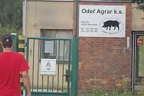 Nedávné zamoření Vitického potoka způsobila podle informací Karlovarského kraje firma Odeř Agrar z Odeře, která se zabývá chovem prasat. Podle vyjádření kraje provozuje farma nepovolenou jímku, která má být původcem znečištění.